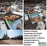ВИТА и российские звёзды призвали патриарха вмешаться в ситуацию с закрытием приюта под Тулой