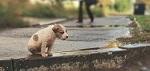 ВИТА направила заявление в Генпрокуратуру по факту найденных убитых животных, ранее обитавших в приюте при Свято-Казанском монастыре в селе Колюпаново Тульской области