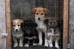 Ура! Полиция возбудила уголовное дело о гибели собак из монастырского приюта
