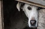 >Генеральная прокуратура проверит обстоятельства гибели собак из монастырского приюта под Тулой</a>          border=