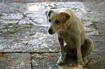 Генеральная прокуратура проверит обстоятельства гибели собак из монастырского приюта под Тулой
