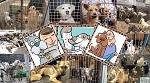 >Животным - приюты, бродячие концлагеря - под запрет! На Regulation вывешен проект о поддержке бродячих концлагерей для животных - цирков и зоопарков - из кармана россиян. 12 дней на обсуждение проекта