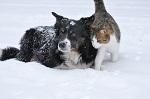 >Российские организации по защите животных направили обращение Главе Республики Саха и мэру Якутска по вопросу решения проблемы с безнадзорными животными