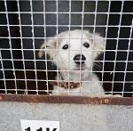 Иркутская прокуратура возбудила уголовное дело о массовом убийстве животных после обращение ВИТЫ