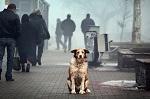>Требуем ввести жесткий госконтроль за разведением животных-компаньонов в стране!