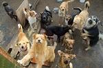 ПЕТИЦИЯ: Требуем ввести жесткий госконтроль за разведением животных-компаньонов в стране!