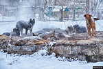 Требуем ввести жесткий госконтроль за разведением животных-компаньонов в стране!