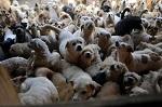 """Вместо введения механизмов жесткого ограничения разведения животных-""""компаньонов"""" в стране их предложили... посчитать?))"""
