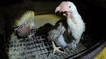 PETA раскрывает куриный ад у поставщика яиц на Олимпийских играх в Токио
