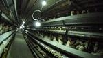 Олимпийские игры в Токио призвали стать веганскими после разоблачения крупнейшего японского производителя яиц ISE Foods, имеющего сертификат на продажу яиц на Олимпиаде