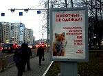 """>И снова антимеховая реклама """"Животные - не одежда!"""" на улицах Череповца"""