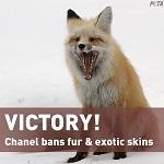 Шанель отказывается от мехов и экзотической кожи