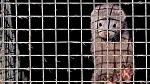 Польша, третья страна по производству меха в мире, проголосовала за запрет звероводства