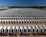 >BBC расследует «Мрачную сторону молочной индустрии» в известном телешоу