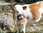>Как молоко воруют у новорождённых детей