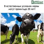 >18 изображений, которые молочная индустрия не хочет вам показывать, но мы покажем