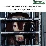 18 изображений, которые молочная индустрия не хочет вам показывать, но мы покажем