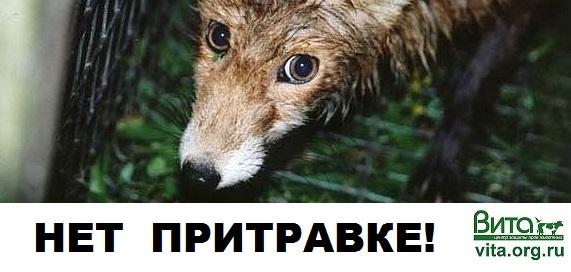 МеждуНет притравке: пресс-конференция 15 мая, 12.00, Интерфакс (Москва) | ВИДЕО | ПЕТИЦИЯ