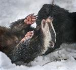 Требуем внести запрет притравочных станций в Федеральный Закон о защите животных