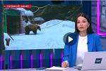 >Очередной сюжет о притравке в Фирсановке - и снова оправдание жестокости. Комментарий ВИТЫ - М24