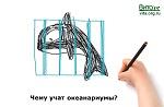>Чему учат океанариумы?