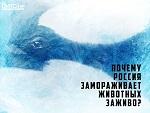 Как смелое молчание СМИ, учёных, экологов о китовой тюрьме в Москве привело к разрастанию масштабной общероссийской проблемы