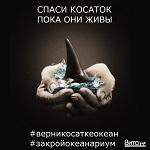 >Спаси косаток, пока они живы. Узники китовых тюрем ждут освобождения