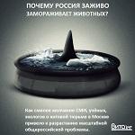 >Учёные отметили ухудшение состояния косаток и белух из китовой тюрьмы в Приморье и призвали немедленно начать реабилитацию обитателей китовой тюрьмы