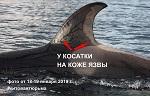 >Китовая тюрьма России. Ветеринар китовой тюрьмы оценивает здоровье косаток и белух как хорошее. А вот - фото