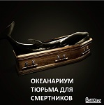 >««Кирилл, 1 год. Я умер в китовой тюрьме». В Москве прошел пикет за освобождение косаток и белух из приморской бухты