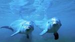 В Канаде запретили содержать в неволе дельфинов и китов