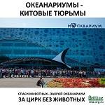 КАК ПОДПИСАТЬ ПЕТИЦИЮ НА РОИ Запретить добычу (вылов) китообразных в учебных и культурно-просветительских целях