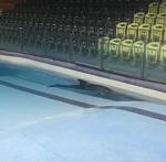 """""""Так звучит одиночество. Так кричит отчаяние"""" - российский ветврач просит эвакуации дельфина из Ирана"""