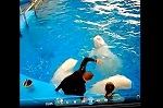 """>О """"тренерах"""" морских млекопитающих, избиении белух в Приморском океанариуме и москвариумомании"""