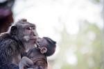 """На Кубани усыпили более 150 краснокнижных обезьян. Комментарий ВИТЫ изданию """"+1"""""""