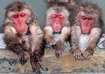 """На Кубани усыпили более 150 краснокнижных обезьян. Комментарий ВИТЫ изданию """"+1"""" ("""