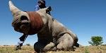 >Китай ослабляет 25-летний запрет на торговлю частями носорогов и тигров