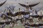 Коронавирус: запрет весенней охоты 2020 в регионах России