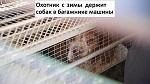 >Охотник с зимы держит собак в багажнике машины