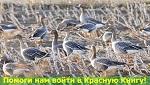ЭКСТРЕННО! Голосование заканчивается ЗАВТРА! На кону десятки видов! Спаси животных - внеси их в Красную книгу!