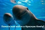 ЭКСТРЕННО! Голосование заканчивается 24 декабря! На кону десятки видов! Спаси животных - внеси их в Красную книгу!