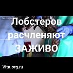 >Крупнейший поставщик расчленяет лобстеров заживо(ВИДЕО)