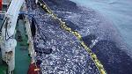 >Борьба с рыболовством это также борьба с современным рабством