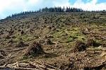 Уничтожение русского леса. Тверская область