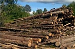 Ответ ВИТЫ Правительствe Тверской области по поводу вырубок. Уничтожение русского леса. Тверская область