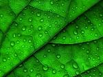 Что мы должны знать о листьях, деревьях и жизни на планете