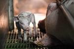 Всемирный день защиты водных животных - 3 апреля