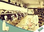 Фермеры просят Министерство сельского хозяйства США определить термин «говядина»