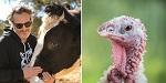 День Благодарения без убийств: вега́н Хоакин Феникс призывает людей проявить сострадание  и отказаться от мяса