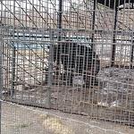 >Россия сплошь усыпана медведями в клетках: как и 15 лет назад